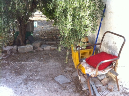 The chair my Yiayia Maria sits in most days, whiling the time away under the old olive tree.